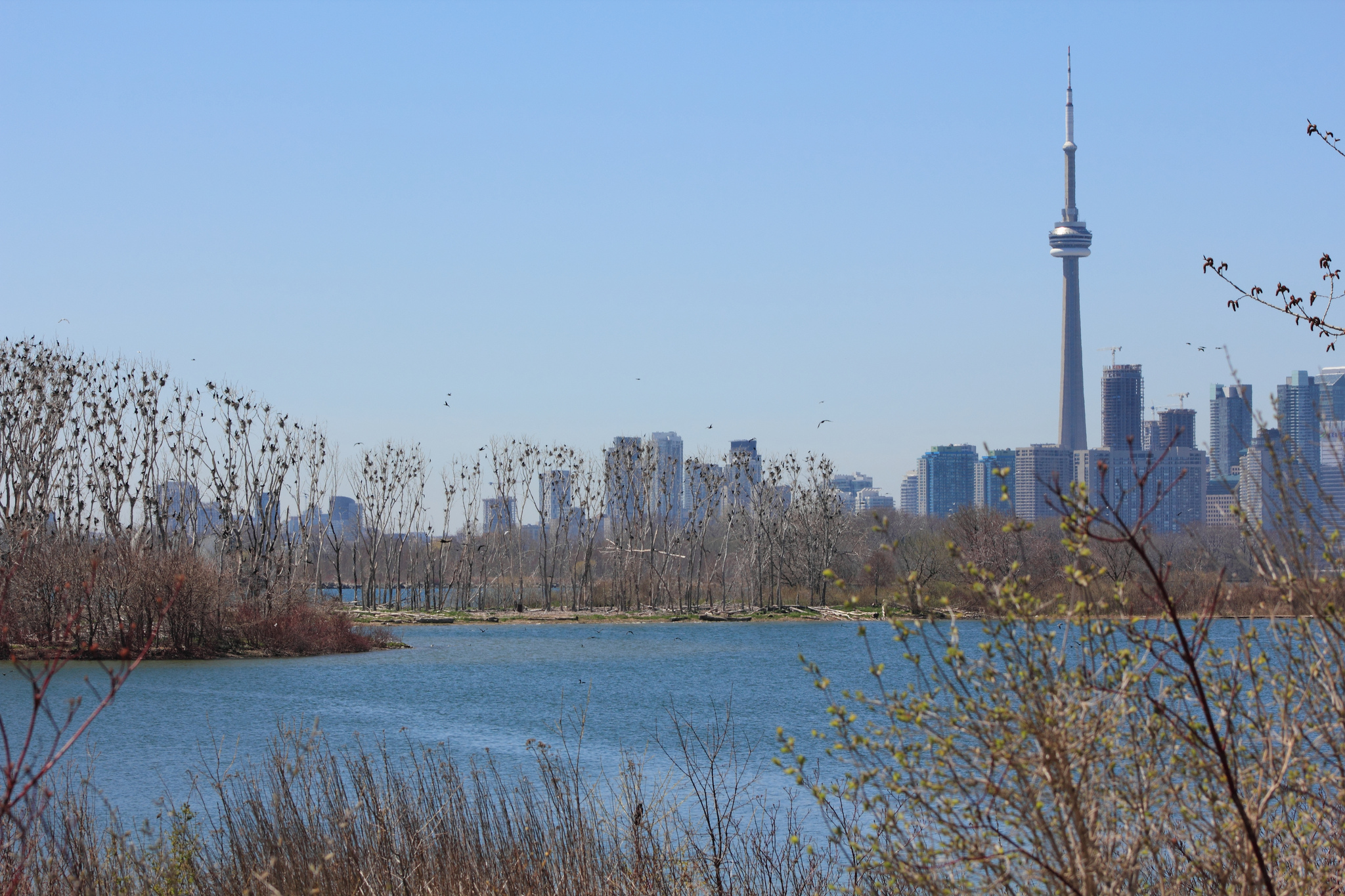 Toronto skyline with tall weeds