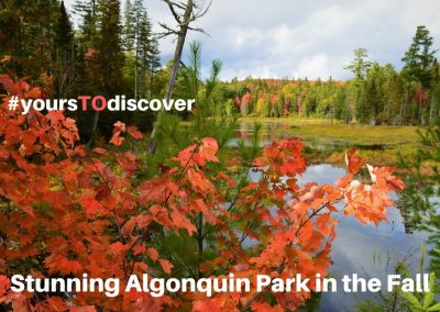 Stunning Algonquin Park in the Fall